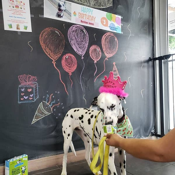 dog at a birthday party