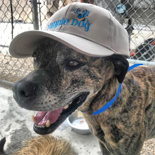 dog wearing a ball cap