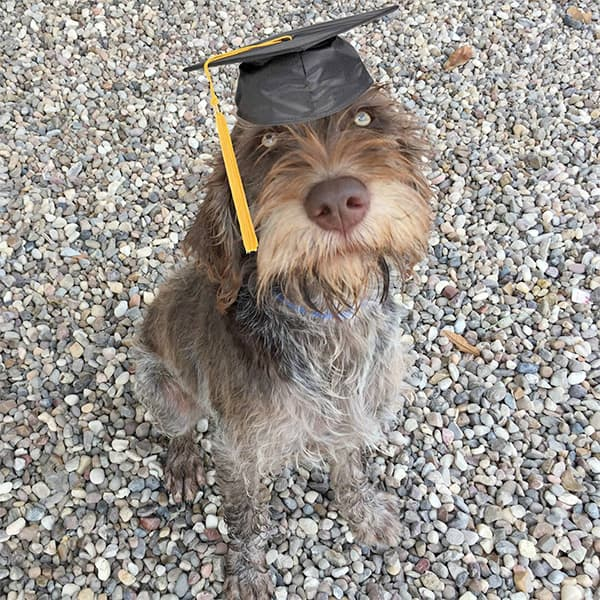 dog wearing a mortar board