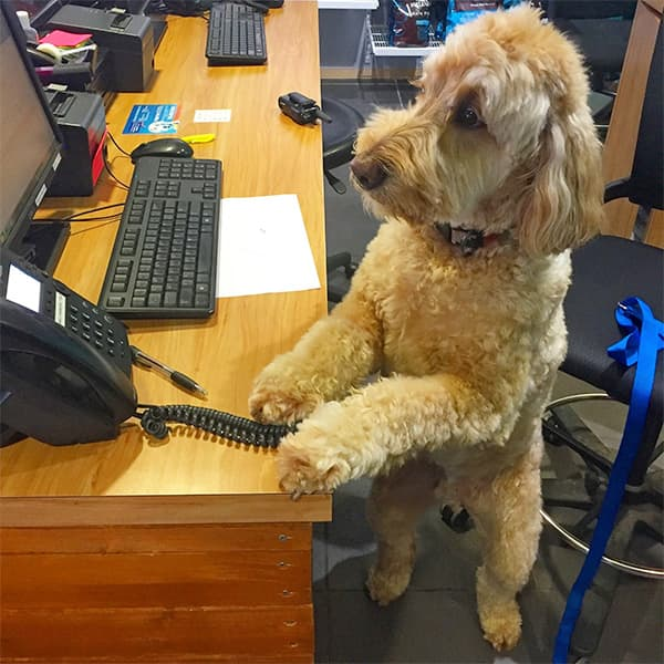 dog working at a desk
