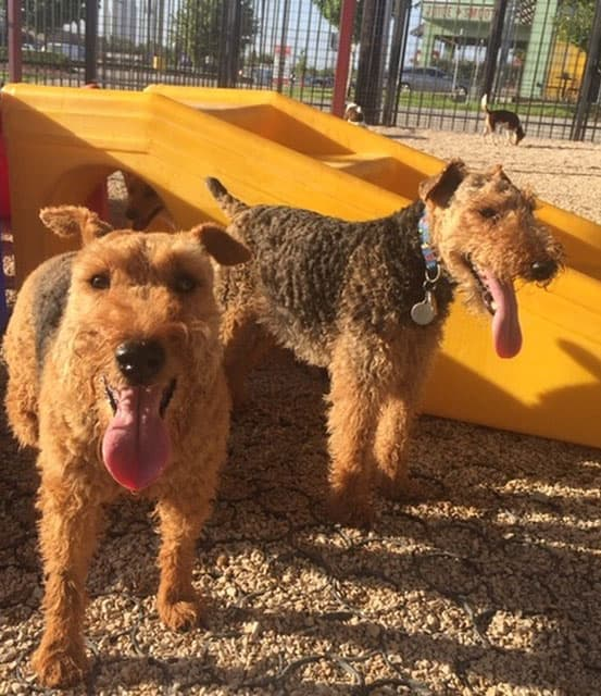 dogs on the playground